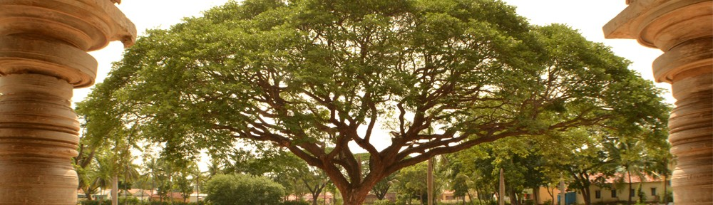 Tree at Amrutesvara Temple in India