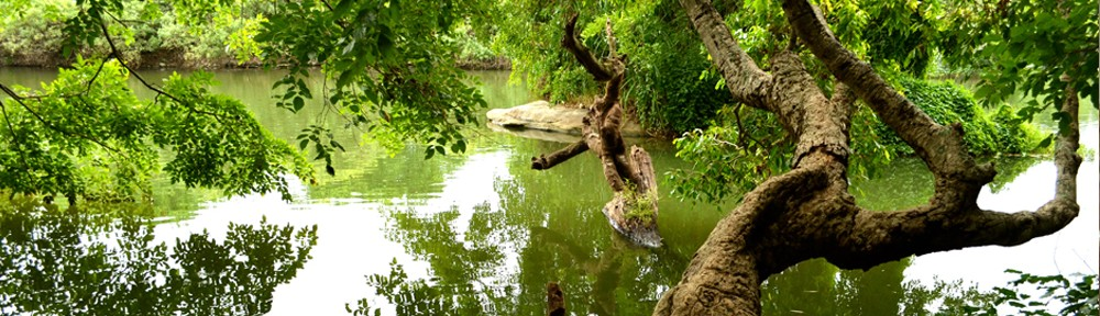 Tree in the River